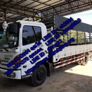 รถ 6 ล้อรับจ้างเขตบางชื่อ มืออาชีพ ปลอดภัยขนย้าย 086-3243964 รถขนของกรุงเทพทั่วไทย